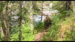 Adventurers In Alaska Stumble Upon A Grizzly Bear Fishing In A River - Video
