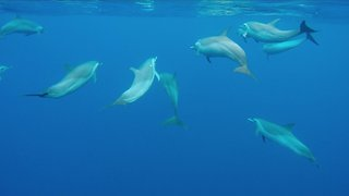 SWIMMING WITH WILD DOLPHINS I Incredible Encounter - GoPro HERO4 - Video
