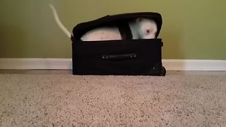 Adorable Dog Hides In A Suitcase