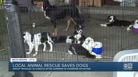 Two dozen dogs rescued from hoarding situation in eastern Arizona