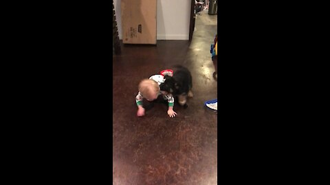Puppy Is On The Hunt To Make Some Lifetime Toddler Friends