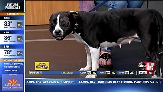 Rescues in Action Oct. 5: precious Macy needs you