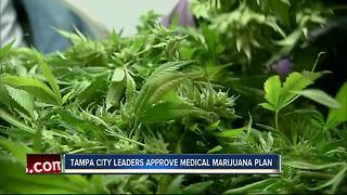 Medical marijuana gets the green light in Tampa - Video