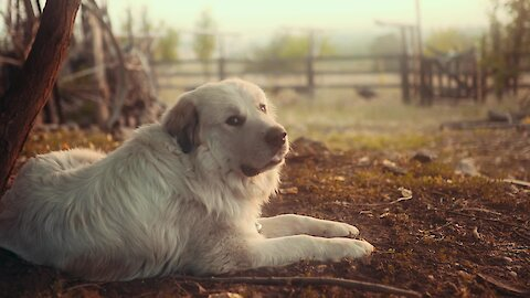 a dog passionate about sounds in the countryside