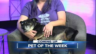 23ABC Pet of the Week: Kino - Video