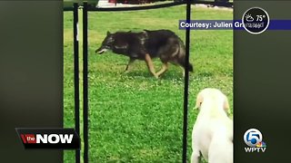 Wild animals spotted in more populated areas