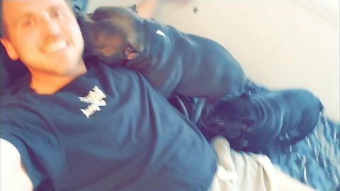 Man documents babysitting pair of crazy dogs