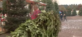 Christmas Tree Rush has already started, earlier than usual