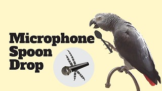 """Stand-up"" parrot performs mic drop with spoon"