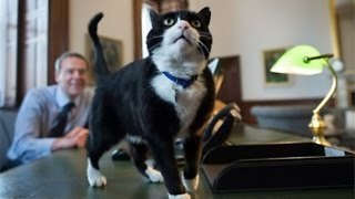 Cats Of The British Government - Video