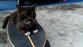 Nonchalant Kitty Loves To Go On Skateboarding Adventures - Video
