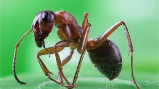 Are Ants The Cheapest Gardeners On Earth?