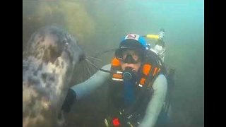 Diver and Underwater Creature 'Seal' Their Friendship