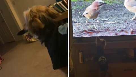 Dog snatches TV remote, asks owner to put on bird channel