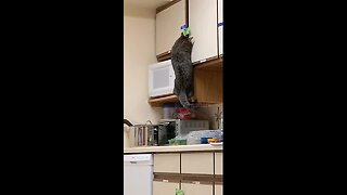 Curiosity feeds the cat! Feline breaks into food cupboard to steal its dinner