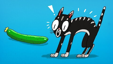 Funny cats and cucumber