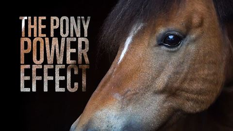 Changing lives through pony therapy