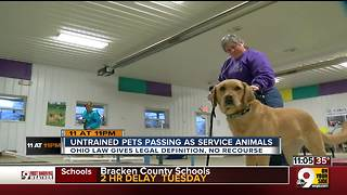Time to stop disguising pets as service animals - Video