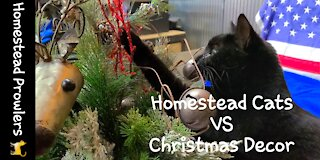 Homestead Cats Christmas Experience