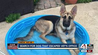 Local man frustrated after dog escapes from vet - Video