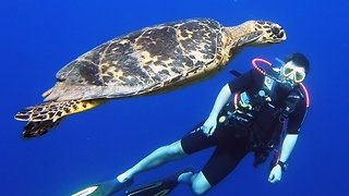 Scuba diver has thrilling encounter with endangered sea turtle