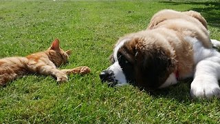 Puppy wants to play, cat has other plans - Video