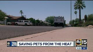 AHS: Pets outside in the summer can be dangerous - Video