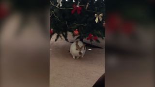 Small Bunny Loves Christmas Tree - Video