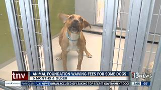 Animal Foundation waiving adoption fees - Video