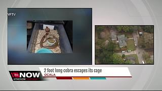 FWC searching for escaped 2-foot long Suphan Cobra in Ocala - Video