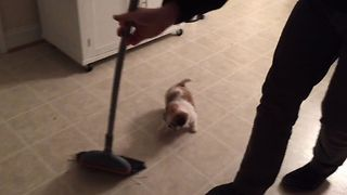 Puppy Helps Sweep The Floor - Video
