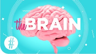 Brilliant Brain Facts! - Video