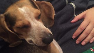 Lullaby duet puts tired dog to sleep