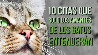 10 Citas Que Solo Los Amantes De Los Gatos Entenderán - Video