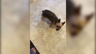 Dog Gets Tricked For A Treat - Video