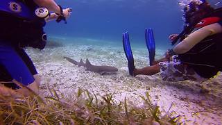 Baby shark seeks attention from divers - Video