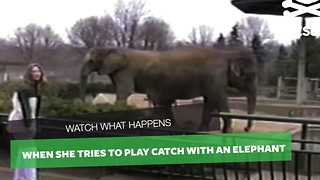 She Jokingly Throws Item At Elephant To Catch, Animal's Response Left Me In Stitches - Video