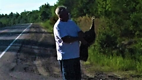 Motorist stops to help wild turkey, forms strong attachment