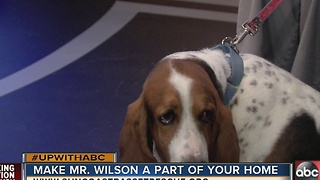 Rescues In Action: Meet Mr. Wilson