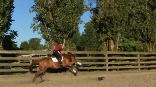 Horse comically startled by chicken in his way - Video
