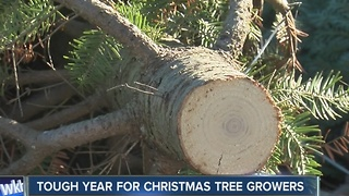 Christmas tree farms challenges this year - Video