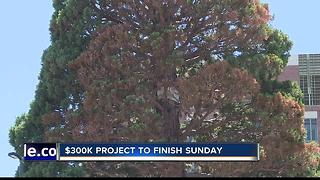 Boise's Giant Sequoia on the move Saturday night - Video