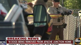 14 dogs removed from Apache Junction home - Video