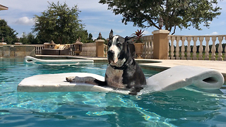 Great Dane chills in pool, learns to use floatie