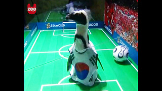 Penguin Soccer Match - Video