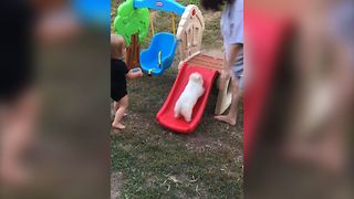 Tiny Puppy Loves Playing On A Slide