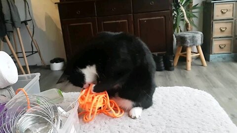 Cat loves his ball of woll