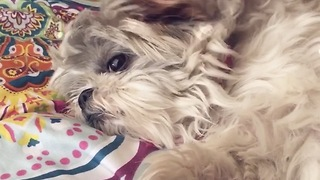Adorable rescued dog loves her sister so much!  - Video