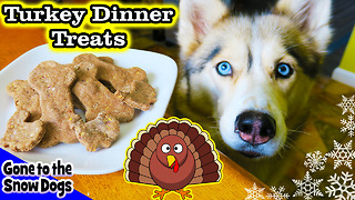 DIY dog treats: Thanksgiving dinner for dogs - Video