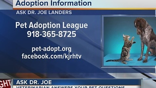 Dr. Joe returns to midday to answer pet health questions - Video